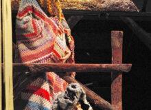 Свиня - заслужена артистка України Людмила Ракута, Корова Зорька - Анфіса Зінченко